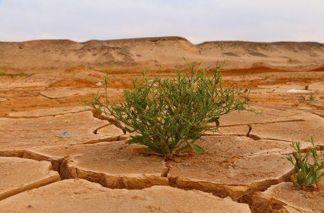Adattamento climatico. Scade il 6 settembre l'avviso pubblico per progetti d'adattamento ai cambiamenti climatici in ambito urbano