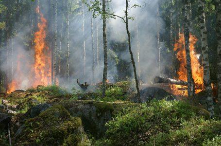Decreto-legge Incendi: 100 milioni ai Comuni per interventi di prevenzione