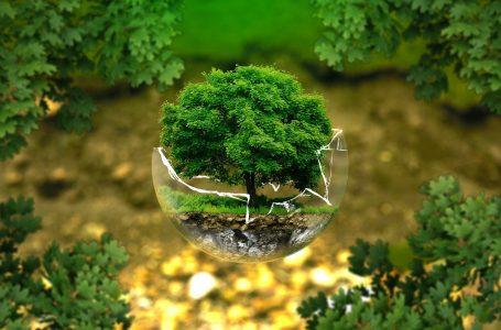Biodiversità. Il Parlamento Europeo ha adottato una risoluzione: dovere di diligenza obbligatorio per la tutela e inclusione dell'ecocidio e del diritto delle generazioni future nel diritto ambientale internazionale